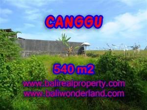 MURAH ! TANAH DI CANGGU BALI RP 4.350.000 / M2 - TJCG131 - INVESTASI PROPERTY DI BALI