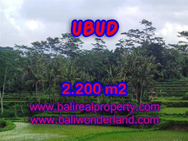 Jual tanah di Ubud Bali 2.200 m2 view sawah dan gunung di Ubud Payangan