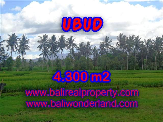 JUAL TANAH DI UBUD BALI MURAH RP 2.350.000 / M2 - TJUB370