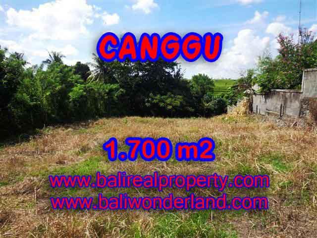 JUAL TANAH DI CANGGU CUMA RP 6.850.000 / M2