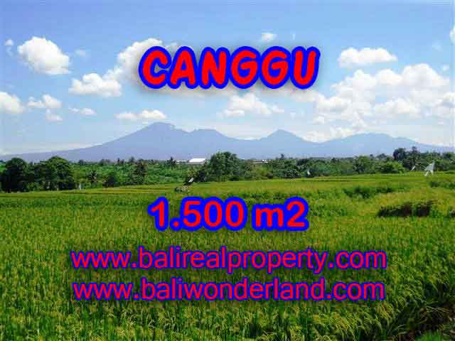 TANAH DIJUAL DI CANGGU CUMA RP 4.650.000 / M2