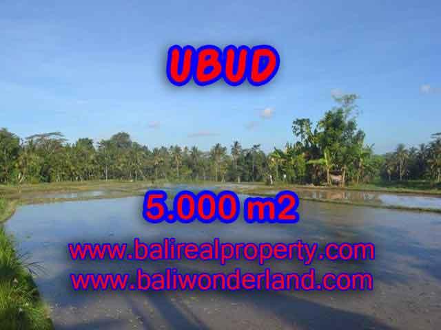 TANAH MURAH DI UBUD BALI TJUB413 - INVESTASI PROPERTY DI BALI