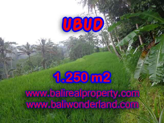 Murah ! Tanah di UBUD Bali Dijual Rp 1.350.000 / m2 - TJUB405