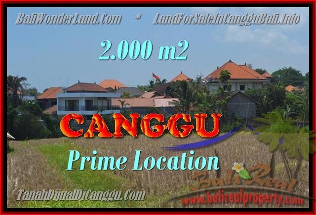 JUAL TANAH MURAH di CANGGU 20 Are View sawah lingkungan villa