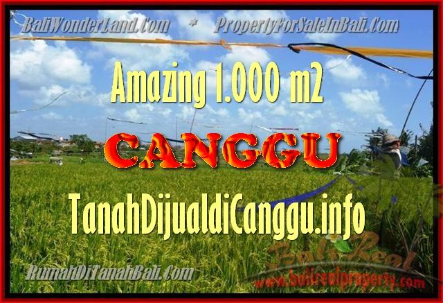 TANAH MURAH DIJUAL di CANGGU 10 Are di Canggu Kayu tulang