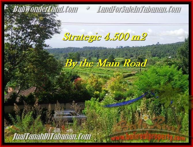 TANAH MURAH di TABANAN BALI 4,500 m2  view Gunung, sawah, hutan dan kota denpasar