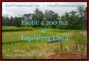 TANAH DIJUAL di UBUD 4,200 m2 di Ubud Tegalalang