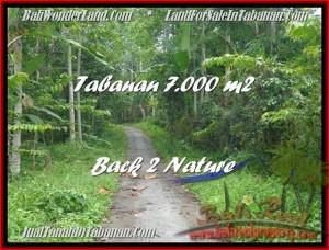 TANAH di TABANAN DIJUAL Untuk INVESTASI TJTB176