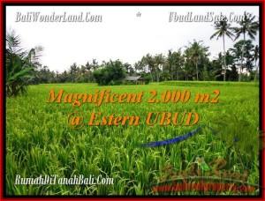 JUAL MURAH TANAH di UBUD 2,000 m2 di Ubud Pejeng