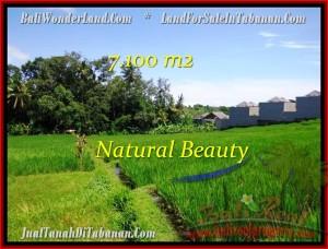 TANAH JUAL MURAH  TABANAN 7,100 m2  View sawah dan Sungai