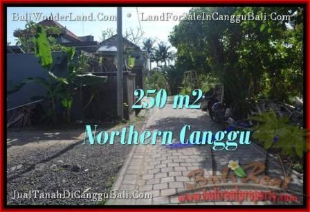 TANAH DIJUAL MURAH di CANGGU BALI 250 m2 di Canggu Pererenan