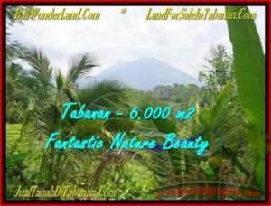 JUAL TANAH di TABANAN BALI 6.000 m2 View Gunung, sawah, sungai dan Laut Selatan