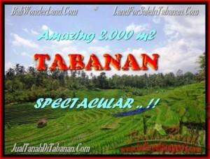 INVESTASI PROPERTY, JUAL TANAH MURAH di TABANAN BALI TJTB172