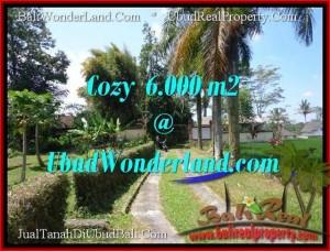 TANAH JUAL MURAH UBUD 6,000 m2 View Sawah link Villa