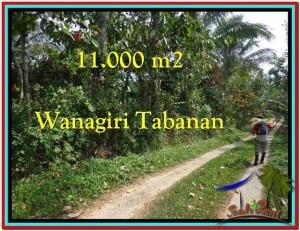 TANAH DIJUAL MURAH di TABANAN 110 Are di Tabanan Selemadeg