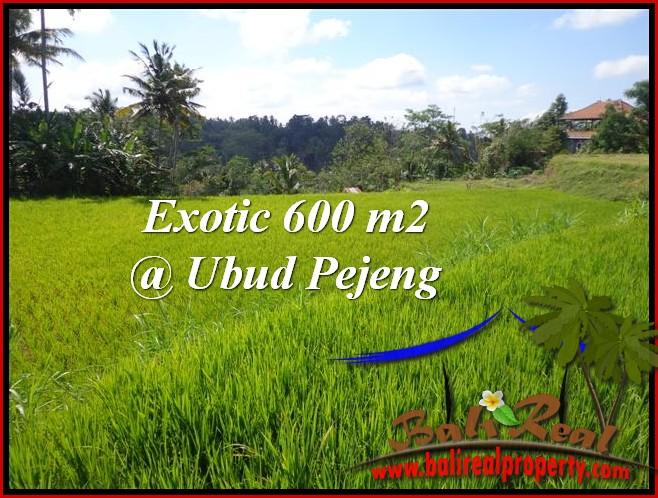 TANAH DIJUAL MURAH di UBUD 6 Are di Ubud Tampak Siring