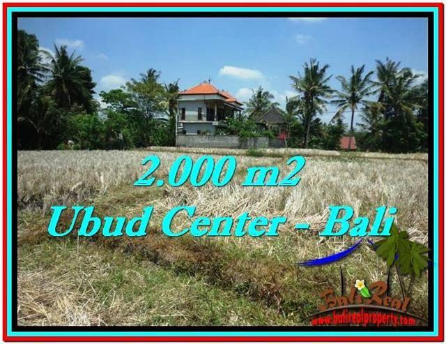 Tanah Murah Jual Di Ubud Bali 20 Are View Sawah Link Villa Rumah Jual Tanah Murah Di Bali Rumah Jual Tanah Murah Di Bali