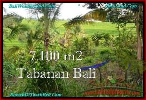 TANAH MURAH JUAL di TABANAN BALI 71 Are View sawah dan Kebun