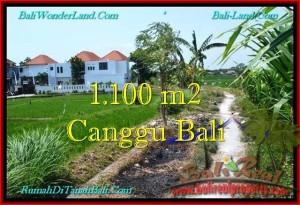 DIJUAL TANAH MURAH di CANGGU BALI 11 Are di Canggu Brawa