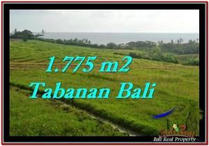 TANAH di TABANAN BALI DIJUAL MURAH Untuk INVESTASI TJTB251