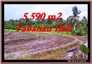 JUAL TANAH di TABANAN 5,590 m2 View sawah dan laut