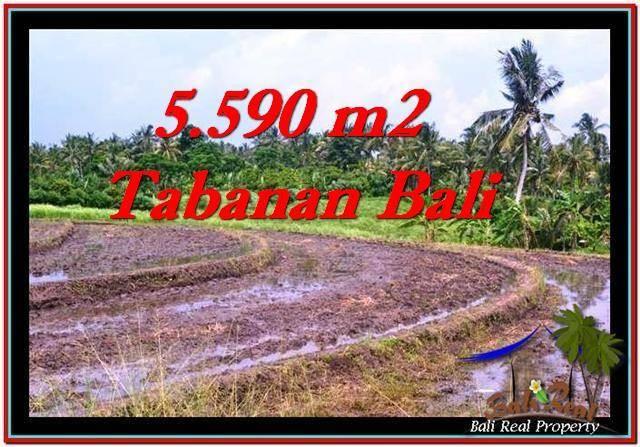 INVESTASI PROPERTY, JUAL TANAH MURAH di TABANAN BALI TJTB257