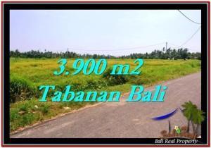 JUAL TANAH MURAH di TABANAN 39 Are di Tabanan Selemadeg