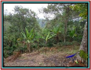 TANAH di TABANAN JUAL MURAH 81 Are View Gunung dan Kebun