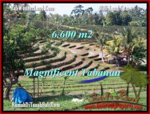 JUAL TANAH MURAH di TABANAN BALI 6,600 m2 di Tabanan Selemadeg