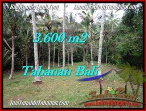 TANAH di TABANAN BALI DIJUAL MURAH Untuk INVESTASI TJTB211