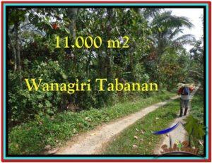 JUAL TANAH MURAH di TABANAN 11.000 m2 View Kebun