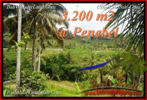 JUAL MURAH TANAH di TABANAN BALI 32 Are View sawah, gunung, air panas