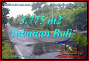 TANAH JUAL MURAH TABANAN 3,775 m2 View kebun