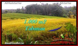 INVESTASI PROPERTY, TANAH di TABANAN BALI DIJUAL MURAH TJTB273