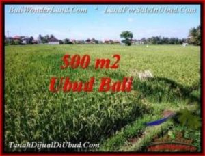 TANAH di UBUD BALI DIJUAL MURAH 500 m2 View Sawah, link. villa