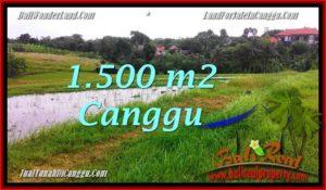 JUAL MURAH TANAH di CANGGU 1,500 m2 View sawah dekat Pantai