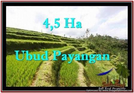 JUAL TANAH MURAH di UBUD BALI 45,000 m2 di Ubud Payangan