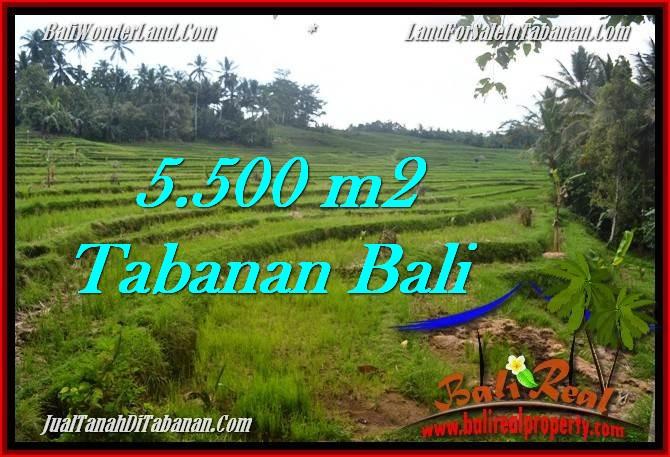 TANAH MURAH JUAL di TABANAN BALI 55 Are View sawah, sungai dan gunung