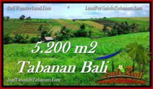 TANAH MURAH JUAL di TABANAN BALI 52 Are View sawah dan sungai