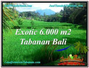 JUAL TANAH di TABANAN 60 Are View sawah, sungai dan gunung