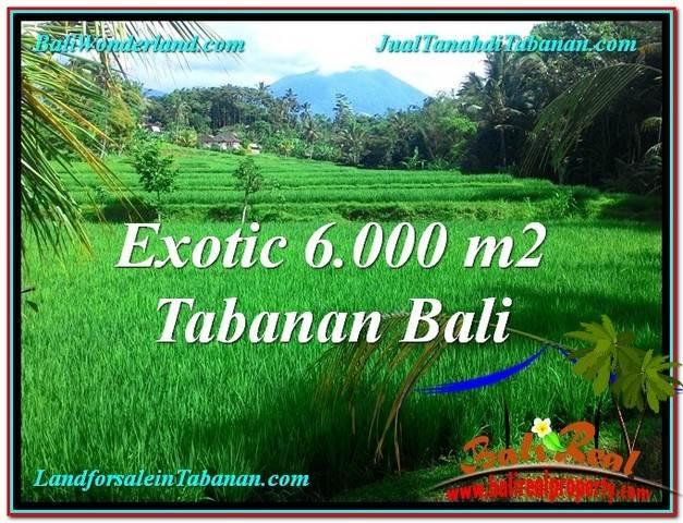 TANAH di TABANAN BALI DIJUAL 6,000 m2 di Tabanan Penebel