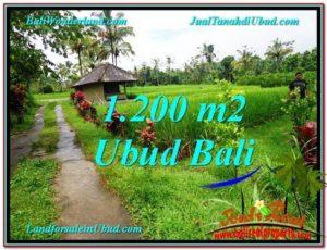 DIJUAL TANAH di UBUD 1,200 m2 di Ubud Payangan