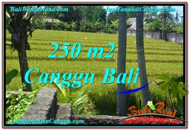 JUAL TANAH MURAH di CANGGU 2.5 Are View sawah lingkungan villa