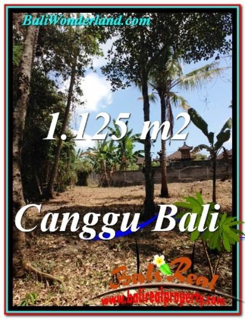 TANAH di CANGGU BALI DIJUAL 11.25 Are View Sawah dan tebing sungai