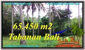 DIJUAL TANAH di TABANAN BALI 65,450 m2 di Tabanan Selemadeg