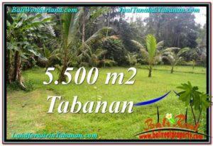 TANAH di TABANAN BALI DIJUAL MURAH 55 Are di Tabanan Penebel