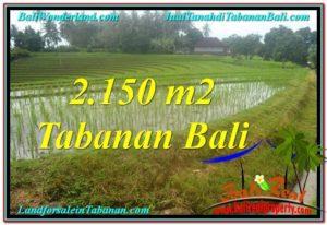 JUAL MURAH TANAH di TABANAN BALI 2,150 m2 View gunung dan sawah