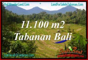 TANAH MURAH di TABANAN 11,100 m2 View gunung dan sawah