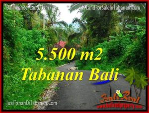 TANAH DIJUAL di TABANAN BALI 5,500 m2 View Laut dan Gunung