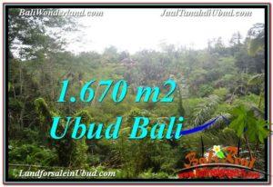 JUAL TANAH MURAH di UBUD Untuk INVESTASI TJUB569